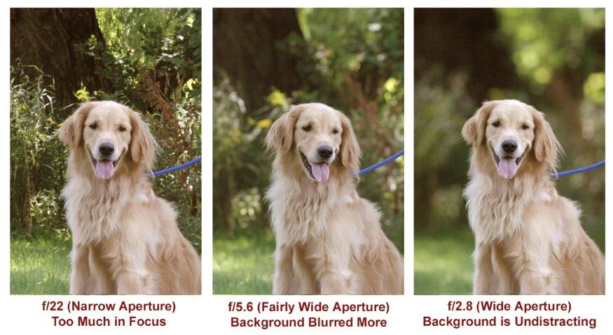 aperture-dog-example